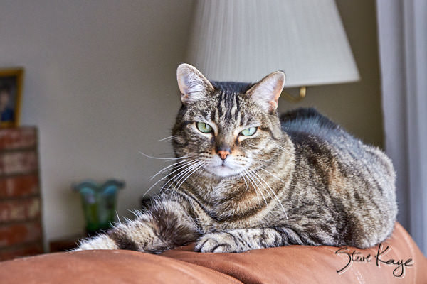 Olivia Felini, in article: How to Achieve Success as a Cat