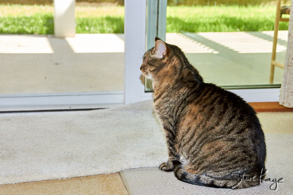 Olivia Felini, Watching the Patio, in article: How to Achieve Success as a Cat