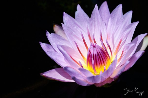 Water Lilly, (c) Photo by Steve Kaye, in blog post, What Is Photography